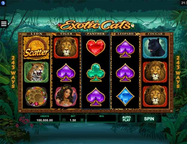 Exotic Cats Slot Game Reels